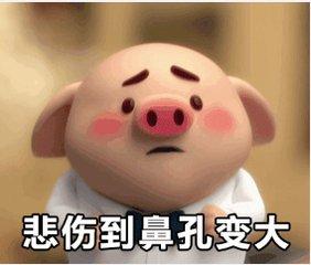 夏季高温潮湿 猪也会生病的!