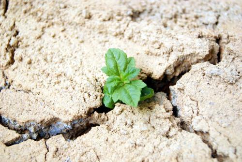 干旱期间如何保持室内栽培的产量?(二)