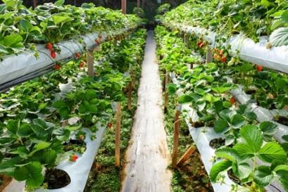 垂直栽培中除湿机的必要性