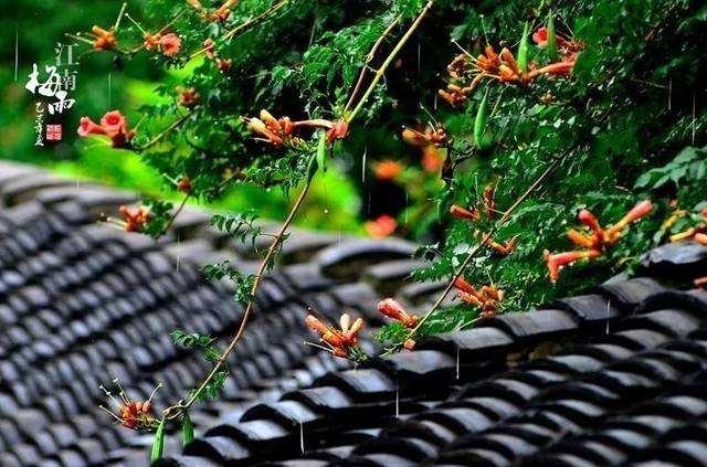 梅雨季节除湿,除湿机更管用