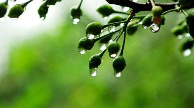 梅雨季如何养生除湿