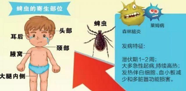 夏天毒虫出没高发期,请注意就医防护