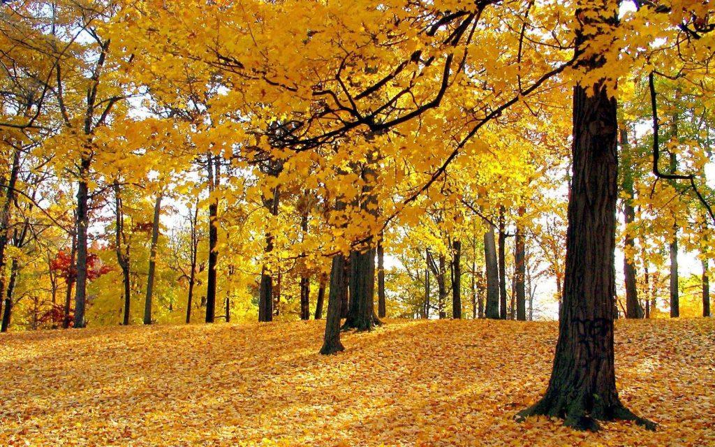 秋冬来临需要赶快安装新风除湿机