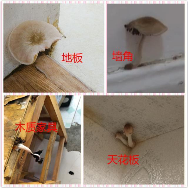 连日秋雨绵绵 家里又有哪些地方长蘑菇了?