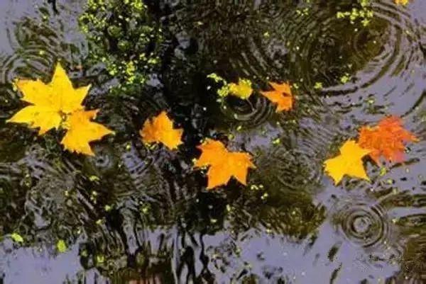秋雨如晦湿气重