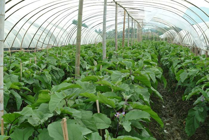 夏季蔬菜栽培技术要点