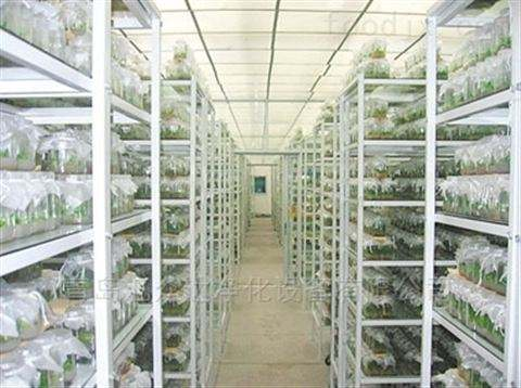 严控组培培养室湿度