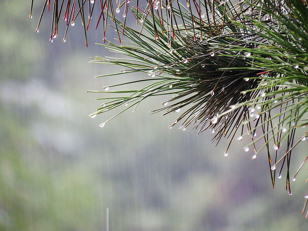 阴雨天潮湿除湿机为解决
