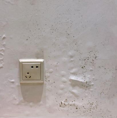 成都气候太潮湿,墙壁发霉了怎么办?