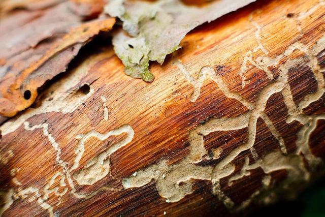 家里为什么容易招致白蚁