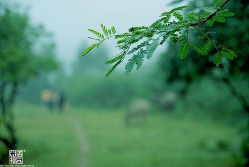 清明时节雨纷纷,家里这么潮湿可不行!