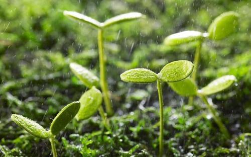 春季潮湿,有什么消毒防潮除湿技巧?