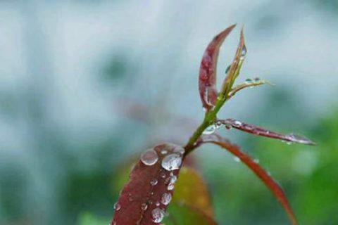 清明春季限定雨来了