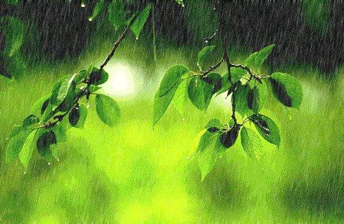 春季多雨又潮湿