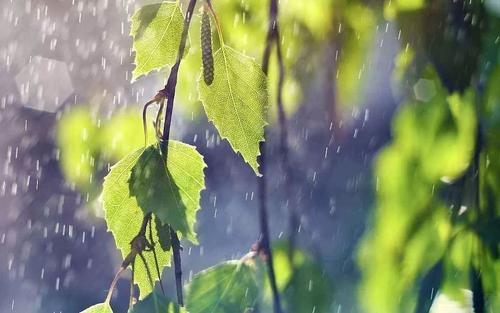 除湿机是梅雨季必不可少的家用电器
