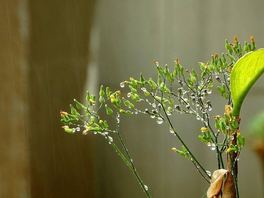 智能除湿机让生活有诗意