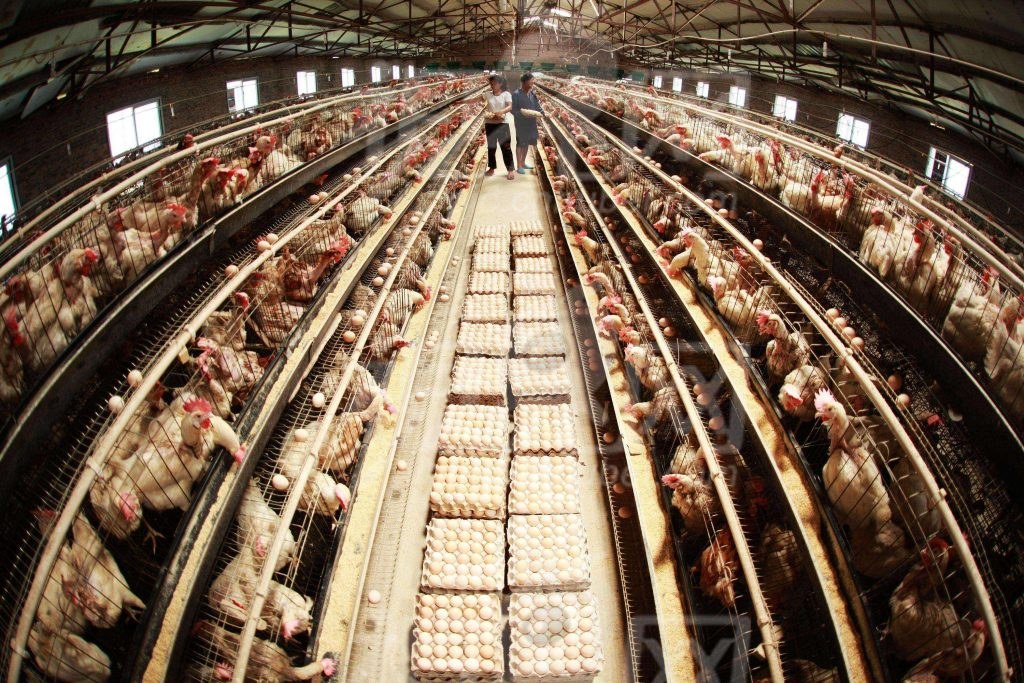 养殖场除湿设备
