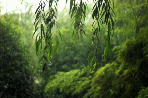 梅雨季,尽早除湿才不会伤及身体