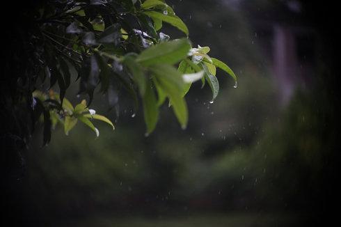 秋意凉凉秋雨潮